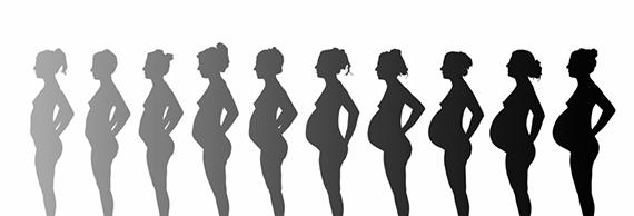 trudnoca-po-nedeljama