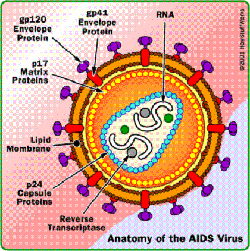 Vaccine-for-AIDS