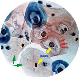 mikroskop-2